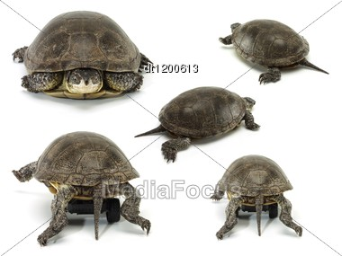 Set Of Mobile Turtle Over White Backgrounds Stock Photo