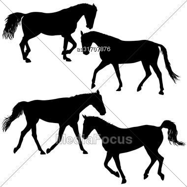 Set Silhouette Of Black Mustang Horse Vector Illustration Stock Photo