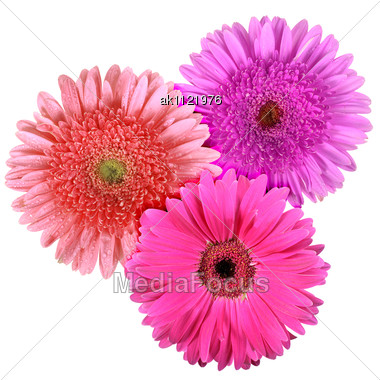 Set Of Three Flowers Close-up Studio Photography Stock Photo