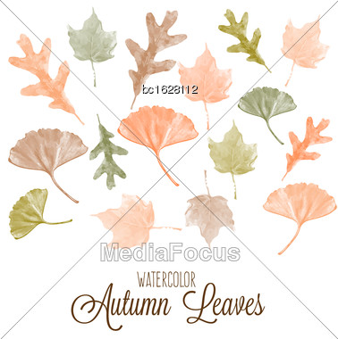 Set Of Watercolor Colorful Autumn Leaves. Vector Illustration Stock Photo