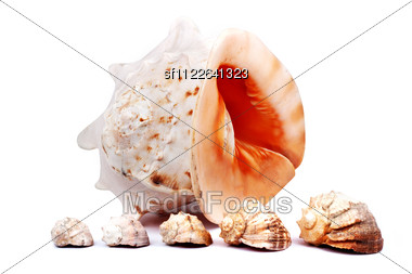 Sex Seashells Stock Photo