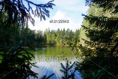 Sight At Trees And Pond From Depth Of A Forest Stock Photo