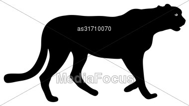 Silhouette Beautiful Jaguar On A White Background Stock Photo