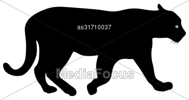 Silhouette Beautiful Panther On A White Background Stock Photo