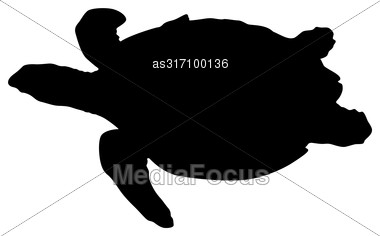 Silhouette Beautiful Sea Turtle On A White Background Stock Photo