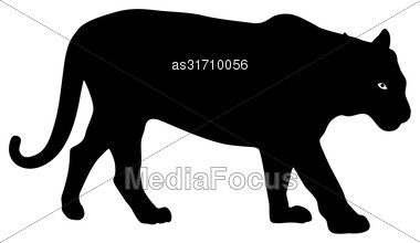 Silhouette Beautiful Tiger On A White Background Stock Photo