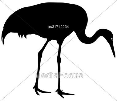 Silhouette Bird Crane On A White Background Stock Photo