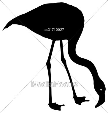 Silhouette Bird Flamingo On A White Background Stock Photo