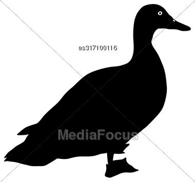 Silhouette Bird Goose On A White Background Stock Photo