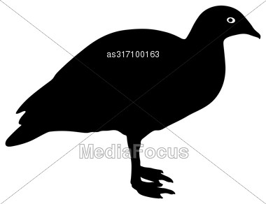 Silhouette Bird Goose On A White Background Stock Photo