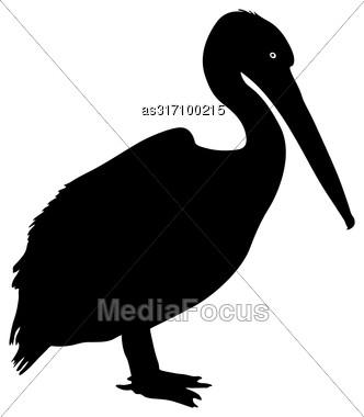 Silhouette Bird Pelican On A White Background Stock Photo