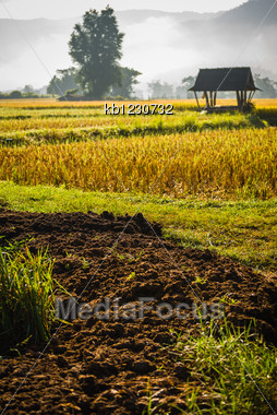 Silhouette Hut In Rice Field In Morning Time In Thailand Stock Photo