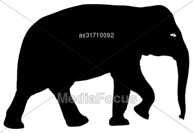 Silhouette Large African Elephant On A White Background Stock Photo