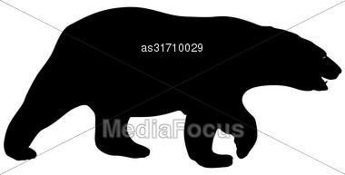 Silhouette Polar Bear On A White Background Stock Photo