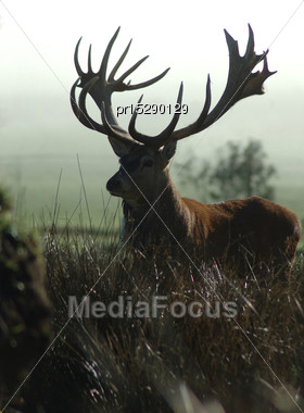 Silhouette Of A Red Deer Stag With Impressive 430 SCI Antlers, West Coast, South Island, New Zealand Stock Photo
