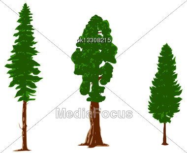 Silhouettes Of Pine Trees Isolated On White Stock Photo