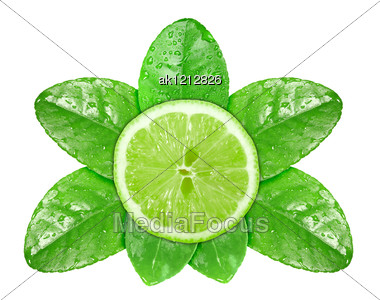 Single Cross Section Of Fresh Lime Fruit On Green Leaf With Dew Close-up Studio Photography Stock Photo