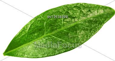 Single Green Leaf Stock Photo