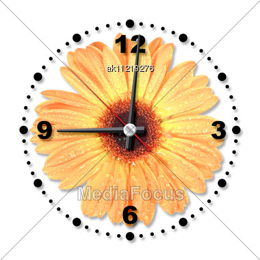 Single Orange Flower As A Office Clock Close-up Studio Photography Stock Photo
