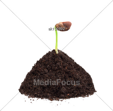 Single Young Green Plant With Seed In A Mound Of Ground. Isolated On White Background. Close-up. Studio Photography Stock Photo