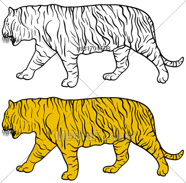 Sketch Beautiful Tiger On A White Background. Vector Illustration Stock Photo