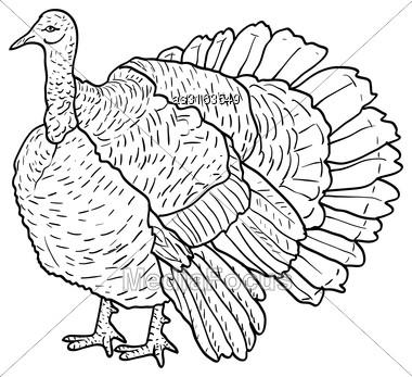 Sketch Black Turkey On A White Background. Vector Illustration Stock Photo