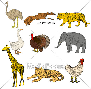 Sketch Elephant Tiger Eagle Rooster Giraffe Ostrich Turkey Goose. Chicken On A White Background. Vector Illustration Stock Photo