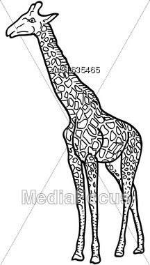 Sketch Of A High African Giraffe On A White Background. Vector Illustration Stock Photo