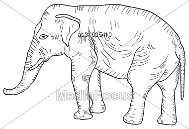 Sketch A Large African Elephant On A White Background. Vector Illustration Stock Photo