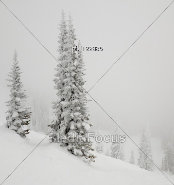 Skiing At Steamboat Springs Ski Area I Saw This Snow Covered Tree In The Fog. Stock Photo