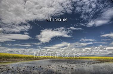 Slough Pond And Crop Saskatchewan Canada Stock Photo