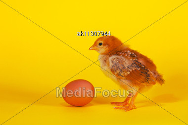 Small Chicken Staying With Easter Egg Against Yellow Background Stock Photo
