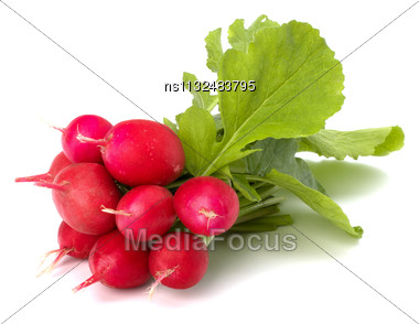 Small Garden Radish Isolated On White Background Stock Photo