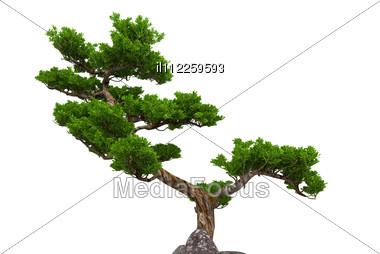 Small Tree With Pot Stock Photo