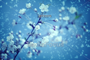 Snow And Flowers. Abstract Environmental Backgrounds Stock Photo
