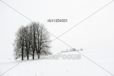 Snow-covered Slope, White Snow And White Sky, Black Trees Stock Photo