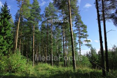 Solar Edge Of Wood Against The Dark Blue Sky Stock Photo