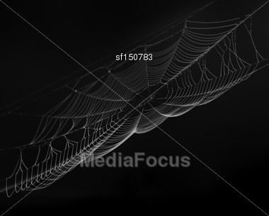 Spider Web On Black Background Stock Photo