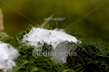Spider Web Silk In North Island New Zealand Stock Photo