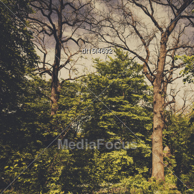 Spooky Forest, Anstract Natural Backgrounds Stock Photo