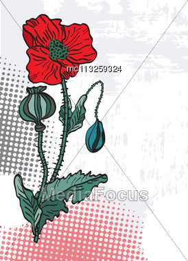 Spring Card With Poppies Stock Photo