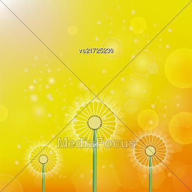 Spring Dandelion On Blurred Yellow Orange Sun Background Stock Photo
