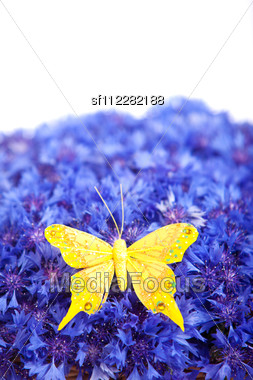 Spring Flowers Blue Cornflower With Yellow Butterfly Wallpaper Backdrop Stock Photo