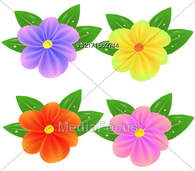 Spring Fresh Colorful Flowers Isolated On White BAckground Stock Photo