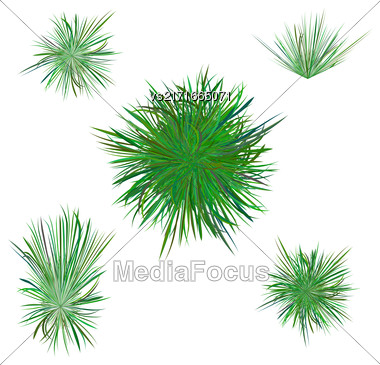Spring Green Grass Isolated On White Background Stock Photo