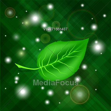 Spring Green Leaf On Dark Blurred Green Background Stock Photo