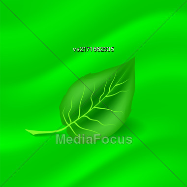 Spring Green Leaf On Sun Blurred Green Background Stock Photo
