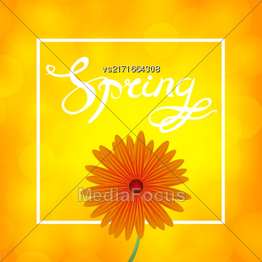 Spring Lettering Design. Orange Flower Banner With Yellow Blurred Background And Text In Square Frame Stock Photo