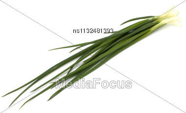 Spring Onion Isolated On White Backgroun Close Up Stock Photo