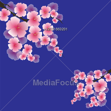 Spring Pink Flowers Isolated On Blue Background. Sakura Japan Cherry Tree. Blooming Pink Flowers. Branch Of Sakura Stock Photo